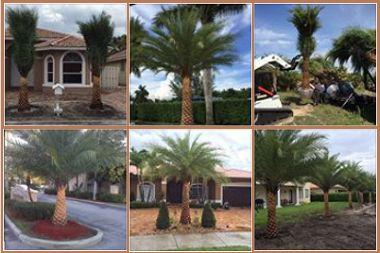 Datepalms nursery landscaping 1